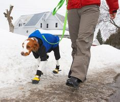 Winter weather have you and your pooch trapped in the house? Trainer Mikkel Becker has suggestions for making walks an option again.
