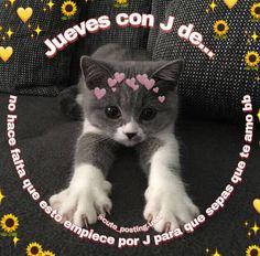 Cute Cat Memes, Cute Love Memes, Funny Animal Memes, Funny Memes, Teen Wolf Memes, Memes Amor, Romantic Memes, Memes Lindos, Roman Love
