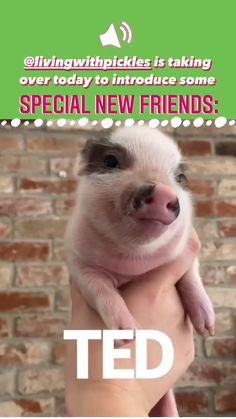 Cute Baby Pigs, Cute Piglets, Baby Animals Super Cute, Cute Wild Animals, Cute Little Animals, Cute Funny Animals, Animals Beautiful, Baby Animal Videos, Funny Animal Videos
