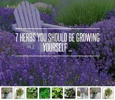 7 #Herbs You Should Be #Growing Yourself ... → #Gardening [ more at http://gardening.allwomenstalk.com ]  #Little #Cute #Recipes #Tomato #Sauce