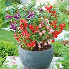 60 Garden Balsam Flower Seeds Mix Color Easy to grow Annual Container Flowers, Container Plants, Sutton Seeds, Vertical Vegetable Gardens, Sprouting Seeds, Balcony Flowers, Garden Web, Annual Flowers, Free Plants
