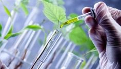This report studies Green and Bio Solvents in Global market, especially in North America, China, Europe, Southeast Asia, Japan and India, with production, revenue, consumption, import and export in these regions, from 2012 to 2016, and forecast to 2022. Click Here- http://ow.ly/N00f30dCItg