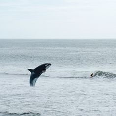 Huntington Beach - California by Stefanie Kappel, via Flickr