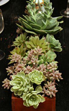 how to display succulents 30 cute examples.htm 48 best s u c c u l e n t s images succulents  succulent  48 best s u c c u l e n t s images