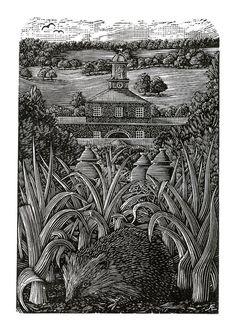 Andy English. A Chatsworth Hedgehog. (wood engraving).