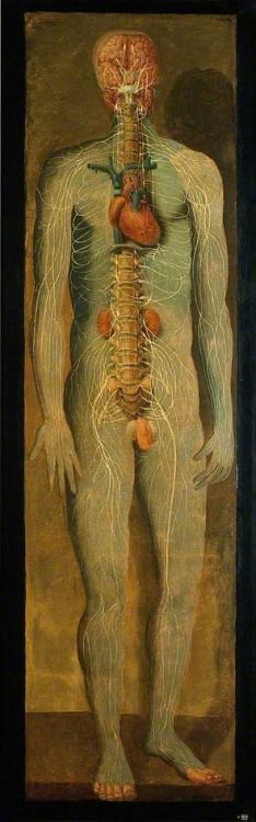 A Standing Figure Showing the Vertebral Column, Nerves, Kidneys, Heart and Brain by Jacques-Fabien Gautier D'Agoty Date painted: 1764/1765 Oil on canvas , 203 x 65 cm Collection: Wellcome Library
