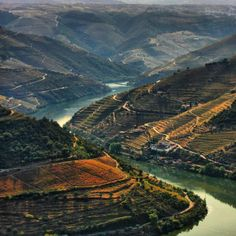 Autumn in Douro valley Douro Portugal, Visit Portugal, Lisbon Portugal, Douro Valley, Need A Vacation, City Break, Travel Images, Day Tours, Far Away