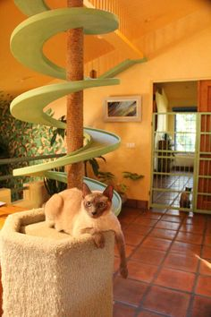 Cat Furniture - Cat Climbing Structures - love these winding stairs!!! #CountryLiving #cats