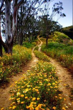 Verliefd: Het pad Het pad is oneindig, maar met een mooi begin ...