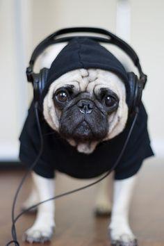 Stereo pug