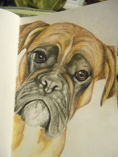 pencil sketch of a random Boxer .. peek a boo https://www.facebook.com/PlaquesbyHeartyCrafts