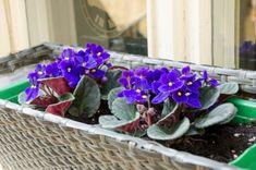 Bonsai, Indoor Plants, Spring, African Violet, Gardening, Inside Plants, Lawn And Garden, Horticulture, String Garden