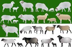 Sheep #vector #livestock #breeding #cattle #sheep #ewe #ram #mutton #lamb #animal
