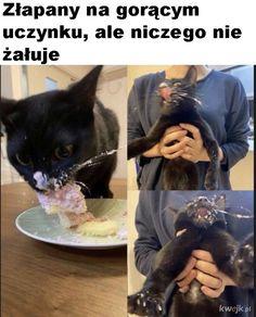 Funny Lyrics, Polish Memes, Weekend Humor, Komodo Dragon, Good Jokes, Obi Wan, Creepypasta, Hetalia, French Bulldog