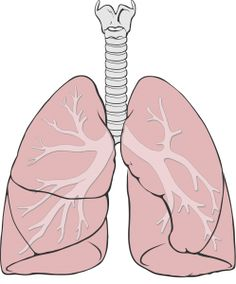 2000px-Lungs_diagram_simple.svg