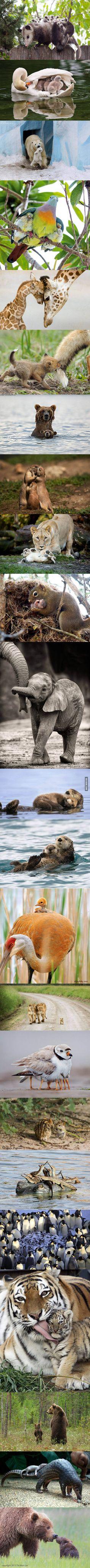 เรียนภาษาอังกฤษ ความรู้ภาษาอังกฤษ ทำอย่างไรให้เก่งอังกฤษ  Lingo Think in English!! :): Animal parenthood = cuteness overload