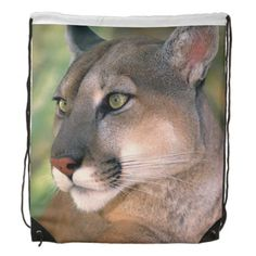 I think the American puma (cougar) has the loveliest coloring of all the cats. Even the BIG cats. Nature Animals, Animals And Pets, Cute Animals, Wild Animals, Desert Animals, Animals Images, Baby Animals, Beautiful Cats, Animals Beautiful