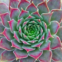 Be bold! And, have fun! Be Bold, Growth Mindset, Instagram Feed, Fisher, Have Fun, Succulents, Business, Creative, Green