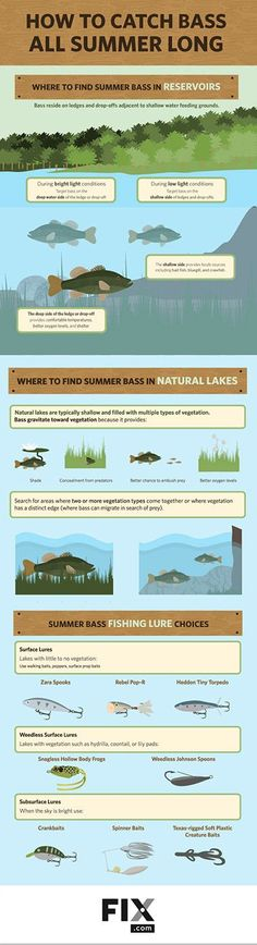 Bass are predictable and fun to catch in the summer months. Understanding their behavior and how to target them are key to catching bass all season long.