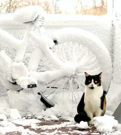 my cat posing for me in front of a bike that got covered in fluffy snow during the first winter snowstorm