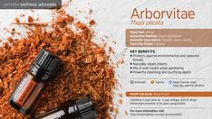 Arborvitae has some great benefits! Not only does it help protect against environmental and seasonal threats but it also a powerful cleansing and purifying agent. It can naturally repel insects. You can apply to wrists and ankles while hiking to help keep bugs at bay.