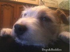 Verrückte Feiertage aus aller Welt - Weltknuddeltag - Mickey - Parson Russell Terrier - Parson - Terrier - Feiertag - Hundeblog - Hundeblogger - Dogblogger - Dogblog - dogsundbuddies.com