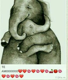 Elephant, Animals, Te Amo, Animales, Animaux, Animal, Animais, Elephants, Dieren