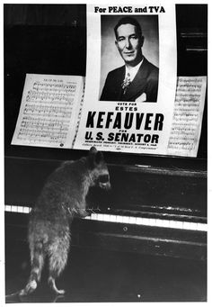 UT Libraries' New Digital Collection Chronicles Life, Career of Estes Kefauver | TN Today