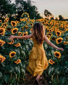 I ended up falling in love with the moon, because it faithfully showed up, night after night is part of Sunflower photo - I ended up falling in love with the moon, because it faithfully showed up, night after night