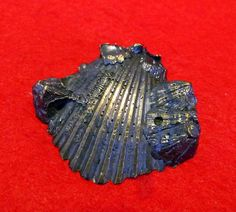 "Lost Wax Cast Bronze  ""Scallop Shell""  Mollusk Decorative Sculpture, $38.25 on sale, www.springgallerymaine.com, www.modernartfoundry.com"