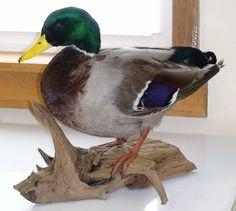 standing duck mount