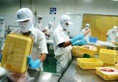 Cá tra Việt chiếm lĩnh thị trường Brazil