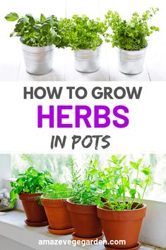 Learn How to grow herbs in pots at your home balcony backyard garden or indoor with FREE quick grow guide. Learn How to grow herbs in pots at your home balcony backyard garden or indoor with FREE quick grow guide. Container Herb Garden, Diy Herb Garden, Herb Garden Design, Fruit Garden, Garden Ideas, Indoor Garden, Indoor Plants, Vegetable Garden For Beginners, Gardening For Beginners