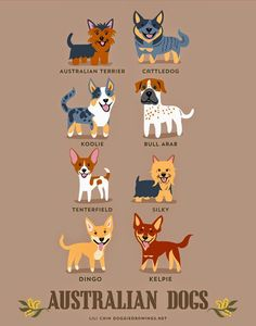 Dogs of the world - Australian Dogs