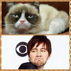 LOL Grumpy Cat Torrance Coombs