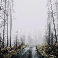 Landscape shots// Forest