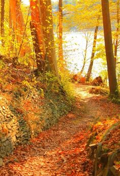 Lovely path through autumn's woods!  Colors are inspiring...makes my heart glad! <pin by Linda Imus on Autumn Splendor>