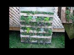 Have an old pallet laying around the yard? Heres a keen way to get good use out of its framework. Two hours and you have a beautiful decorative garden that is edible too! WARNING: How to find and use the proper heat-treated wood pallet; do not use chemically treated wood pallets for indoor furniture, childrens rooms, composting or for fo...