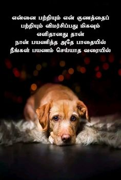 Tamil Motivational Quotes, Tamil Love Quotes, Inspirational Quotes, Reality Of Life Quotes, Swami Vivekananda Quotes, Golden Quotes, Introvert Problems, Mother Quotes, Love Quotes For Him