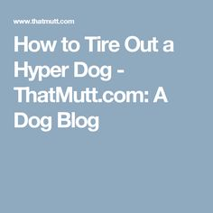 How to Tire Out a Hyper Dog - ThatMutt.com: A Dog Blog