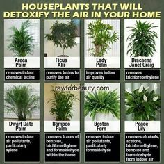 Indoor plants to clean the air in your home.