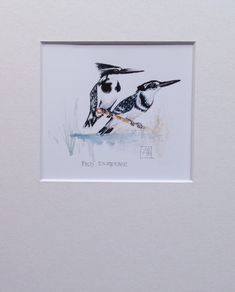 Pied Kingfisher pair A5 Giclée Print www.louisehennigs.co.za