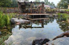 piscine naturelle avec patio aménagé
