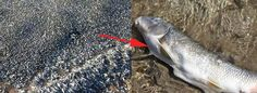 Nearly 4,000 Dead Fish Just Washed Ashore In Australia, And No One Knows Why