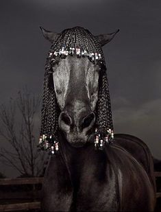 I can just picture him entering the jumper ring with beads clacking and swinging. Or could this become a new style of braiding for the hunter ring?