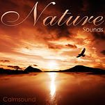 Home - Ocean Sounds this site has free nature sounds Ocean Sounds, Nature Sounds, Calming Sounds, Astrology Planets, Free Tarot Reading, Healing Words, Fear Of The Lord, Amazing Sunsets, Arabian Nights