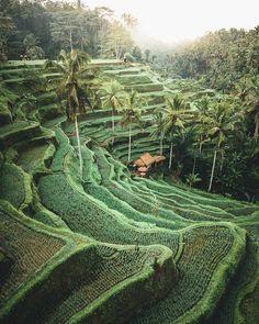 Rice fields in Bali, Indonesia. - 9GAG