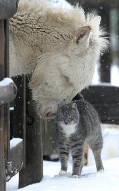Cat- I love you big furry thing. Horse- I love you too tiny furry thing. Farm Animals, Animals And Pets, Funny Animals, Cute Animals, Wild Animals, Funniest Animals, Colorful Animals, Beautiful Creatures, Animals Beautiful