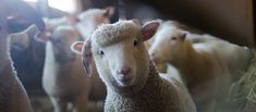 Closet Full of Sheep: How to Build a Giant Yarn Stash for Less (HA! Sheep Breeds, Camera Art, Textured Yarn, Yarn Stash, Hand Spinning, Spinning Wool, Tapestry Weaving, Food Coloring, Knitting Stitches