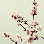 Spring Blossom greetings card